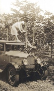Woman stands on top of her automobile in Honolulu, to pick papayas, 1928.