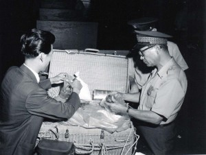 Customs inspection at Honolulu International Airport, 1950s.