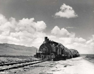 Ewa Plantation Train, Oahu, 1950s.