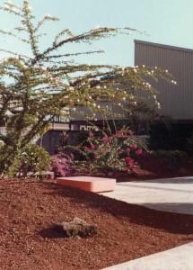 Hilo International Airport January 9, 1981.