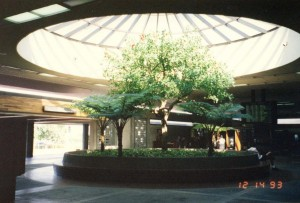 Baggage Claim, Kahului Airport, Hawaii, December 14, 1993.