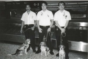 U.S. Department of Agriculture beagle dog corps, Honolulu International Airport, 1990s.